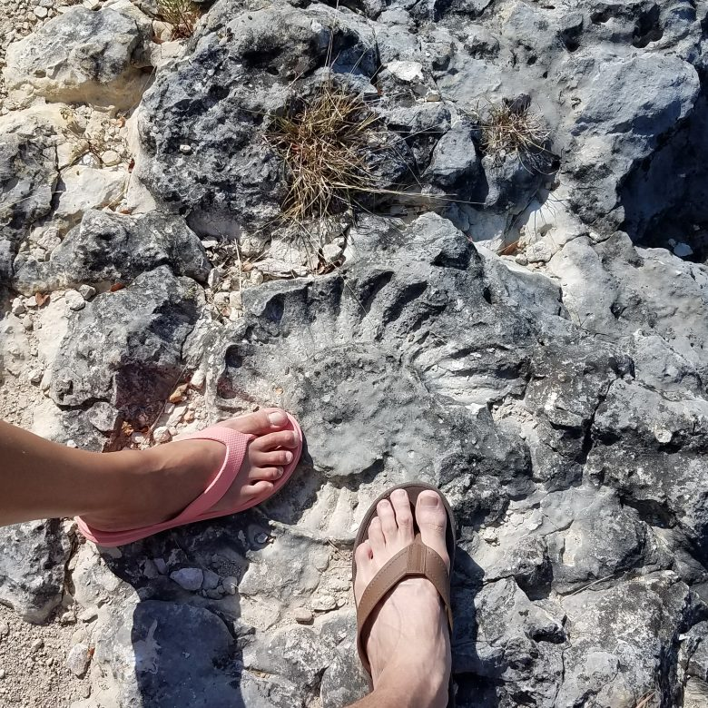 Fossil of ammonite in limestone next to feet in flip flops at the ocean